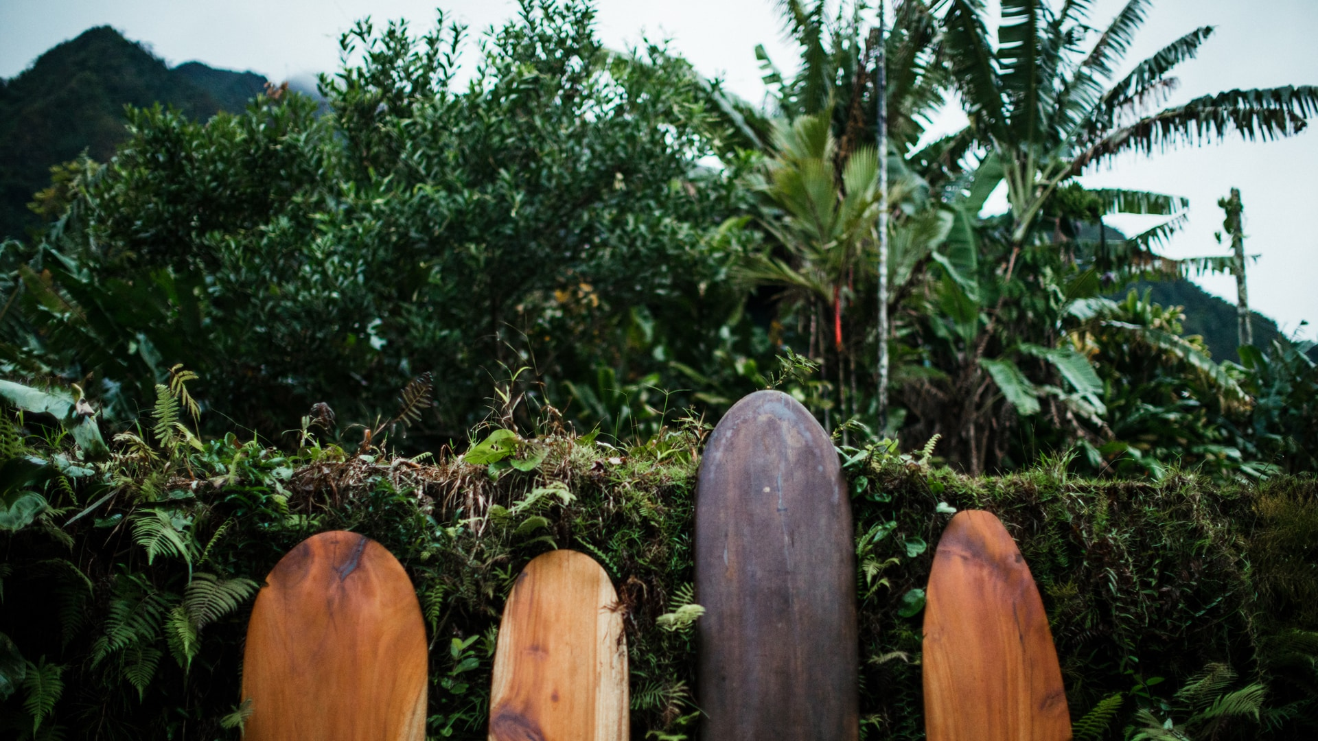 HVCB-hawaiirooted_background