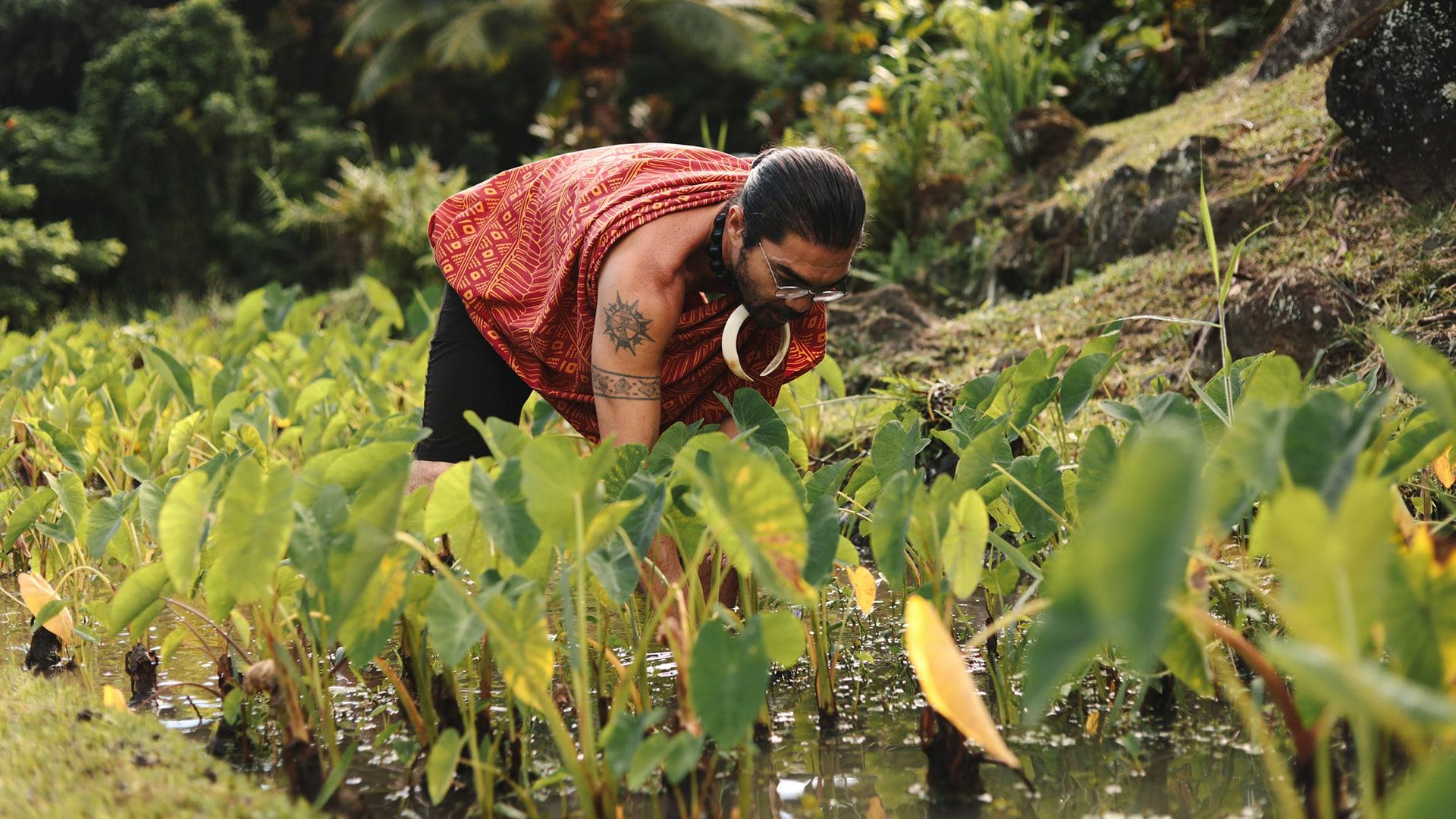 Hawaii Rooted: Greg Solatorio