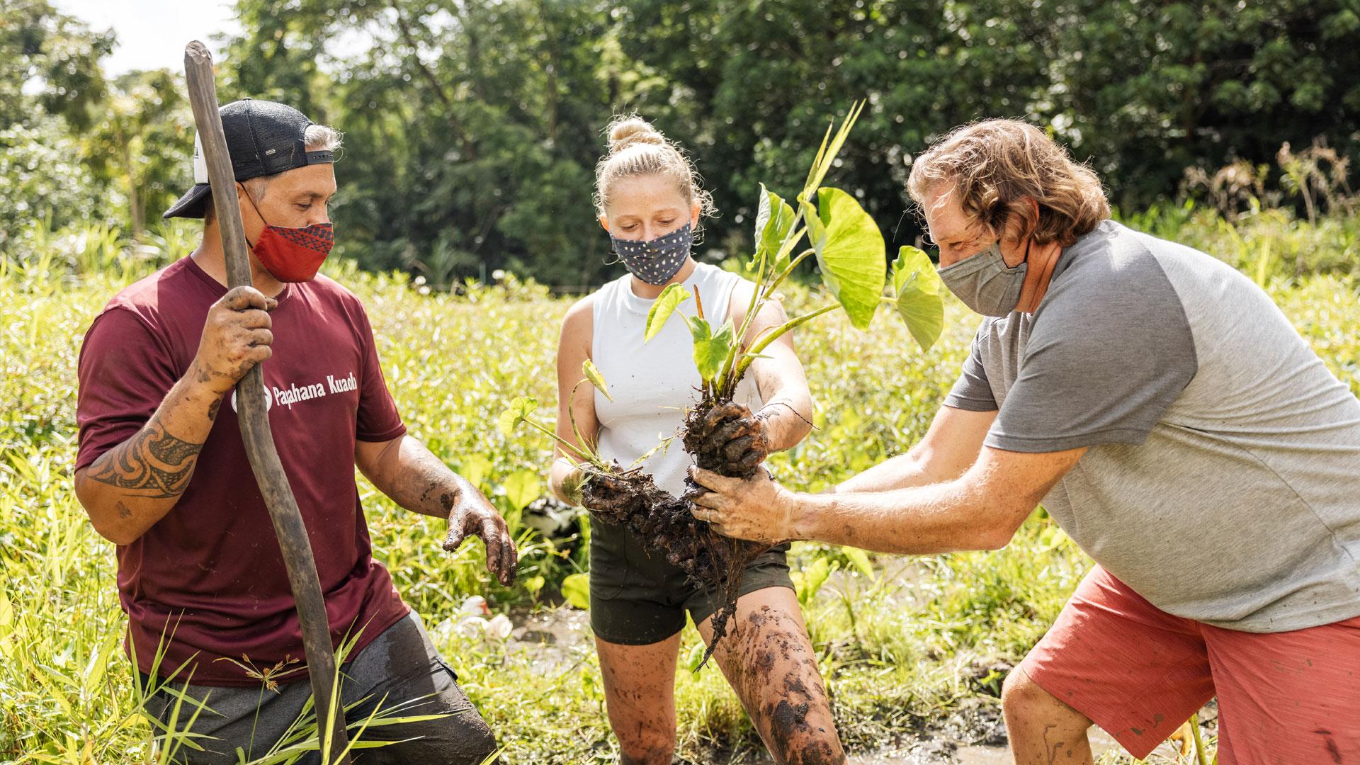 HVCB Sustainable Farming Malama Hawaii